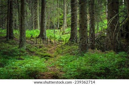 inside of the green wild forest - stock photo