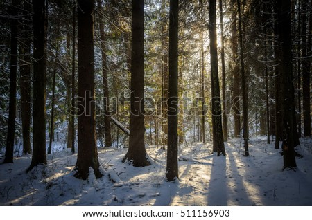 inside of the winter forest in sunny day