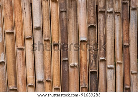 Inside texture of bamboo background