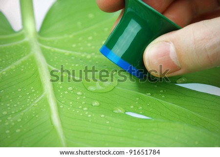 inspecting rain drops on a tropical leaf with lotus effect - stock photo
