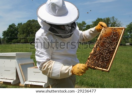 inspecting the hive frame - stock photo