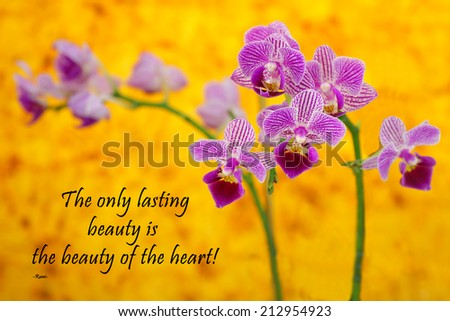 Inspirational quote about life and spirit by the Persian Poet Rumi with a beautiful purple orchid on a yellow background