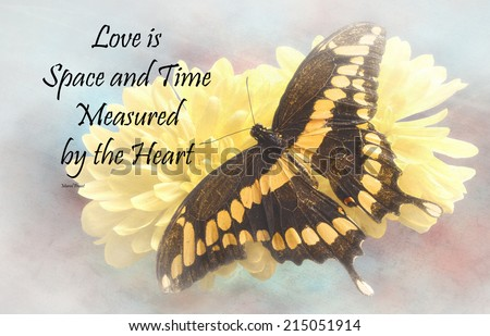 Inspirational quote about life, love, and time by Marcel Proust with a beautiful Giant Swallowtail  Butterfly  on a textured background  - stock photo