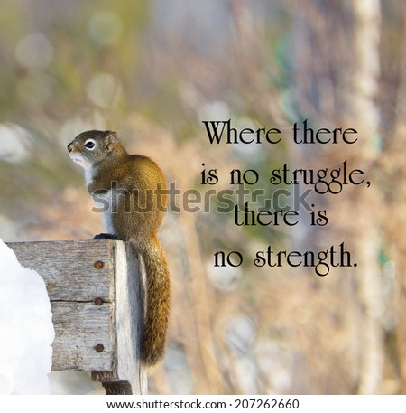 Inspirational quote on adversity by Oprah Winfrey with a sad little squirrel shivering with cold in the winter. - stock photo