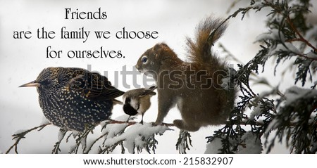 Inspirational quote on friendship by an unknown author with three animals sitting together on a branch during a big snowstorm.