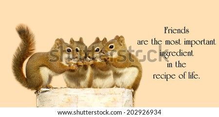 Inspirational quote on friendship by Dior Yamasaki with four little squirrels sharing seeds. - stock photo