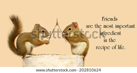 Inspirational quote on friendship by Dior Yamasaki with two cute squirrels making wishes. - stock photo