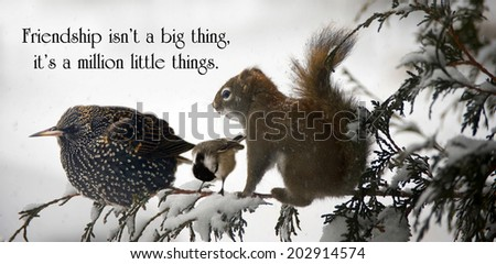 Inspirational quote on friendship with three animals sitting together on a branch during a big snowstorm.