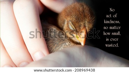 Inspirational quote on kindness by Aesop with a hand protectively holding a sleeping orphaned chick. - stock photo