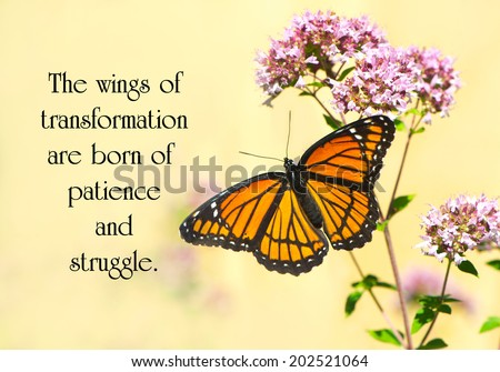 Inspirational quote on life by Janet S. Dickens with a beautiful monarch butterfly perched on some flowers. - stock photo