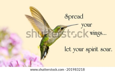 Inspirational quote on life with a beautiful ruby throated hummingbird in motion in the garden. - stock photo