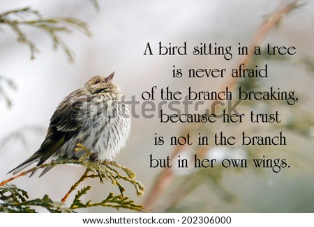 Inspirational quote on life with a pine siskin bird perched on a branch in winter, looking up. - stock photo