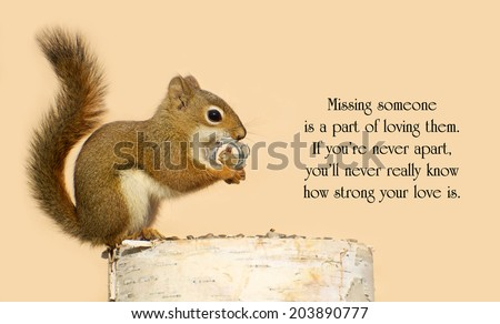 Inspirational quote on love by Helen Fielding with a young male squirrel holding on lovingly to a tiny antique picture frame with a picture of his sweetheart in it.