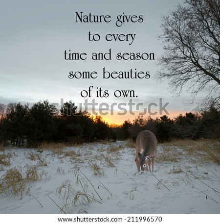 Inspirational quote on nature by Charles Dickens with a lone doe looking for food in the meadow at sunrise in the winter. - stock photo