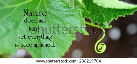 Inspirational quote on nature by Loa Tze with a cucumber leaf, and tendril curling around, looking for something to attach itself to.