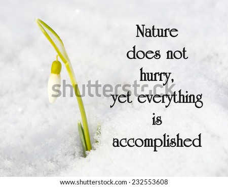 Inspirational quote on nature by Loa Tze with a pretty snowdrop flower growing out of the snow, getting ready to bloom. - stock photo