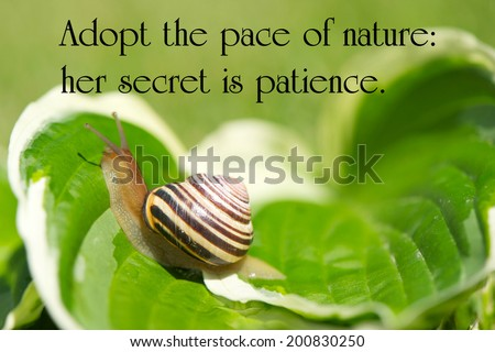 Inspirational quote on nature by Ralph Waldo Emerson, on a closeup image of a little snail gently making its way through life. - stock photo
