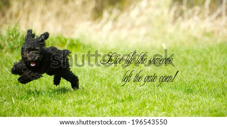 "Inspirational words ""Live life like someone left the gate open"" with an adorable toy poodle enjoying life to the fullest, happily ripping around in the summer."