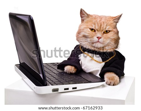 intelligent cat for the laptop.Animal in the academic robes on a white background.