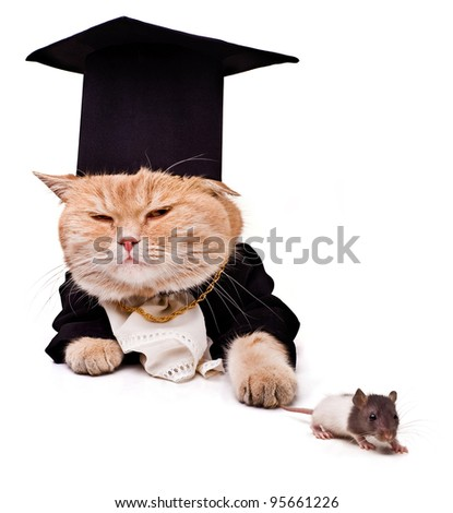 intelligent cat with a mouse for the laptop.Animal in the academic robes on a white background - stock photo