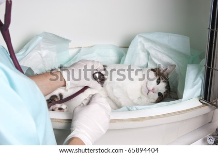 Intensive pet care unit - stock photo