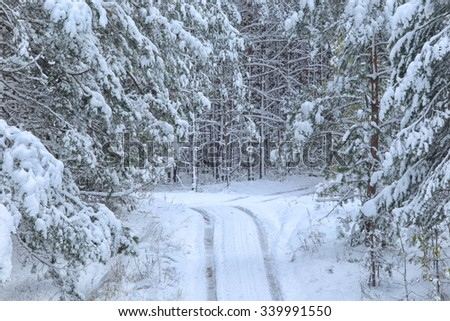 inter landscape snow-covered road in coniferous forest