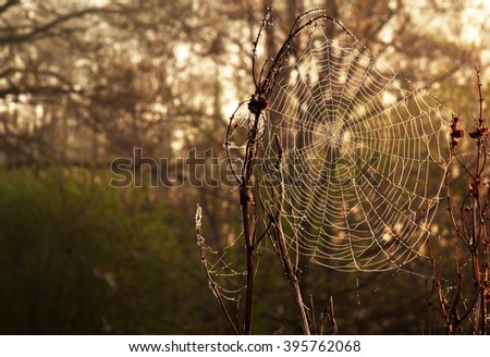 Interesting and atmospheric picture cobweb with drops of morning dew, autumn morning. Empty space for possible text on the right side of the frame. Horizontal view.