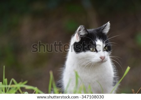 Interesting balck and white cat turned right on dark rural background