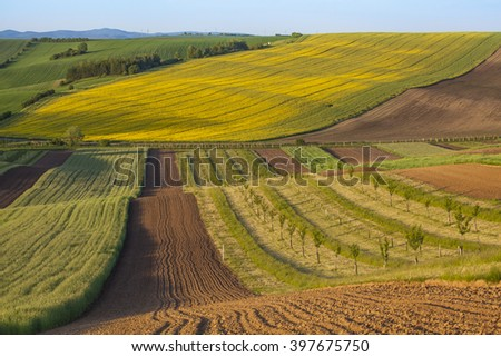 Interesting fields of rapeseed - stock photo