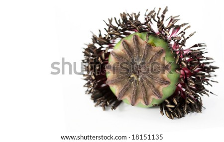 interesting flora against white background