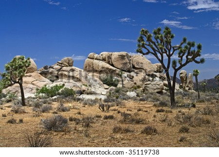 Interesting rock formations and the Joshua tree are part of the interesting landscapes in Joshua Tree National Park in Southern California.