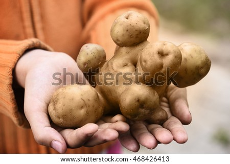 interesting shaped potato in hands of the farmer.