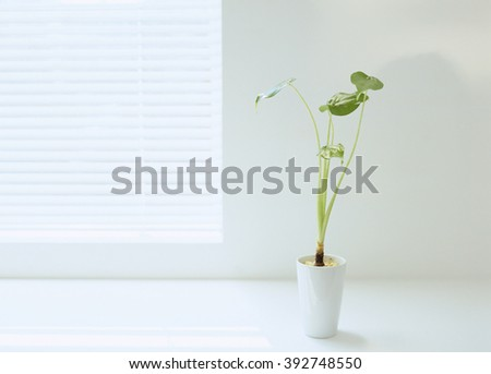 interior concept vase and flowers - stock photo