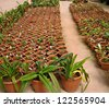Interior of a greenhouse for growing flowers and plants - stock photo