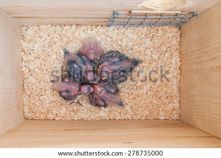 Interior of a nest box with baby parrots in it - stock photo