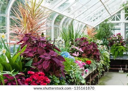 Interior of greenhouse with a variety of plants and flowers - stock photo