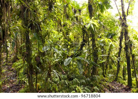 Interior of humid cloudforest on the coastal range in western Ecuador - stock photo