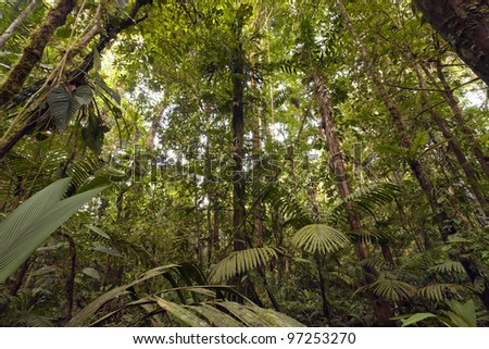 Interior of lowland topical rainforest in the Ecuadorian Amazon - stock photo