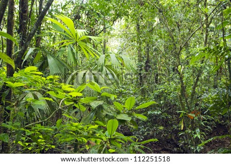 Interior of tropical rainforest in Yasuni National Park, Ecuador - stock photo