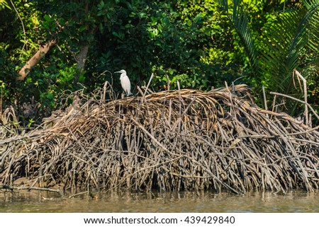 Intermediate egret on the wood heap at riverside, in Thailand. Selective Focus. - stock photo