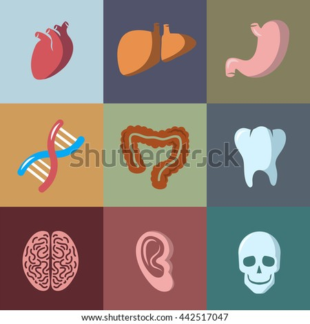 Internal human organs flat icons