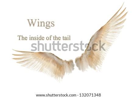 Internal white wing plumage. Isolation. - stock photo
