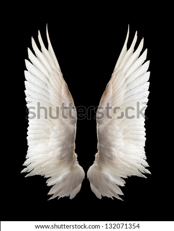 Internal white wing plumage. Isolation. - stock photo