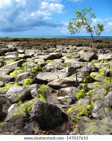 Intertidal Zone of Coastline, Queensland, Australia - stock photo