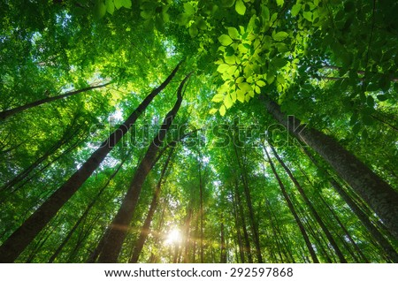 Into the forest. Nature composition. - stock photo