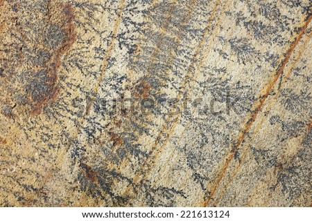 Intricate black and brown fern-like markings on fossil mint sandstone as abstract background texture - stock photo
