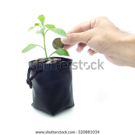 Investing to green business on white background, The tree was planted by money - stock photo