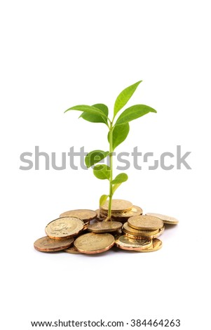 Investment conceptual, coins and growing tree.
