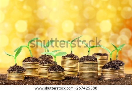 Investment. Golden coins in soil with young plant isolated. Money growth concept. - stock photo