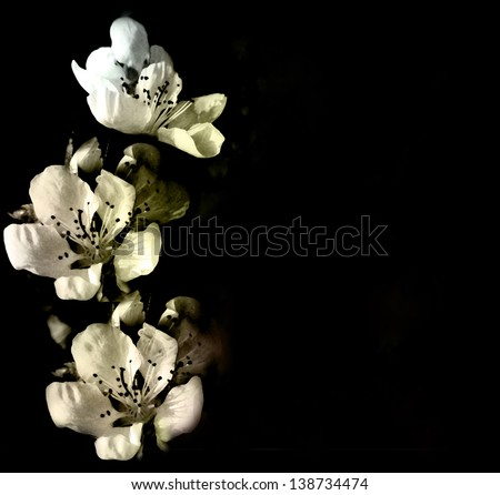 Invitation card with abstract white flowers on black background